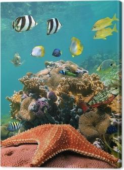 Cuadros en lienzo premium Mar-estrella y pescado