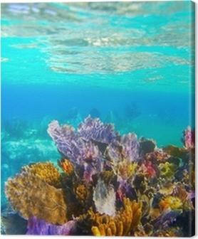 Cuadros en lienzo premium Riviera Maya snorkel arrecife de coral bajo el agua paraíso
