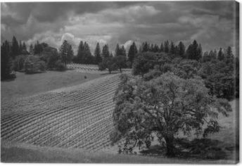 Cuadros en lienzo premium Shake Ridge Ranch viñedos