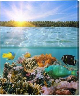 Cuadro en Lienzo Puesta de sol y colorida vida marina bajo el agua