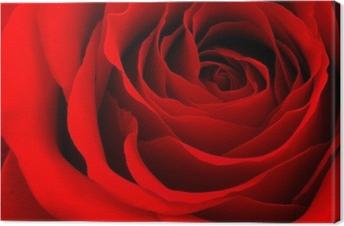 Cuadro en Lienzo Rosa roja