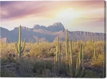 Cuadro en Lienzo Saguaro Parque