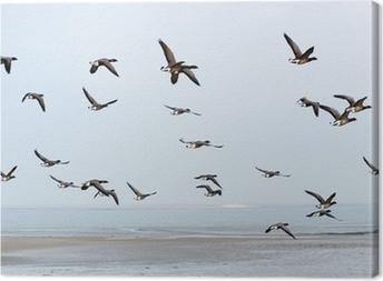 Cuadro en Lienzo Swarm Brent gansos por encima del mar de Wadden