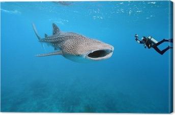 Cuadro en Lienzo Tiburón ballena y fotógrafo subacuático