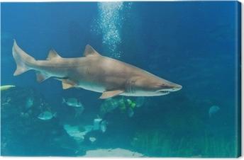 Cuadro en Lienzo Tiburón toro (Carcharias taurus) bajo el agua cerca Retrato del