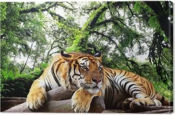 Cuadro en Lienzo Tiger busca algo en la roca en el bosque tropical de hoja perenne