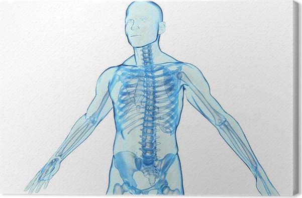 Cuadro en Lienzo Transparente azul modelo 3D del cuerpo humano en el ...