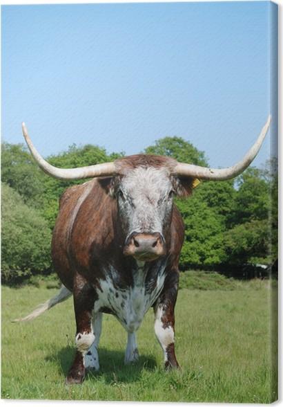 Cuadro en Lienzo Vaca, cuernos largos Inglés • Pixers® - Vivimos ...