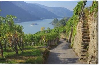 Cuadro en Lienzo Wachau Weinberg - Wachau viñedo 15