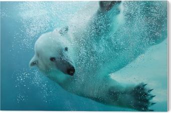 Cuadro en Metacrilato Oso polar bajo el agua ataque