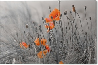 Cuadro en Metacrilato Poppies