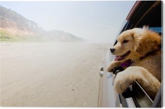 Cuadro en PVC Cachorro mirando por la ventana de un coche