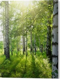 Cuadro en PVC Verano bosque de abedul con sol