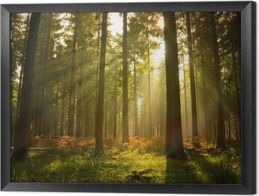 Cuadro Enmarcado Hermoso bosque