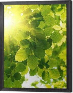 Cuadro Enmarcado Hojas verdes con los rayos solares.