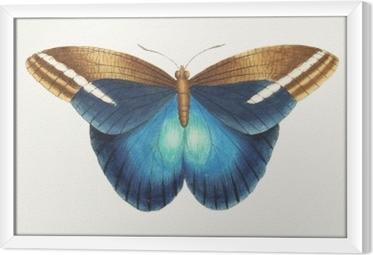 Cuadro Enmarcado Ilustración de ilustraciones de animales
