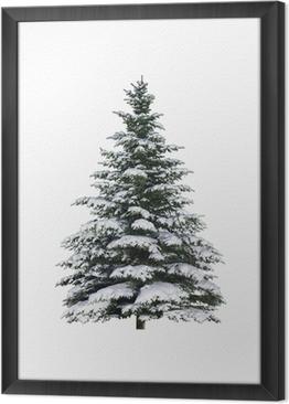 Cuadro Enmarcado Spruce en la nieve