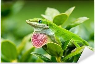 Pixerstick Dekor Grön Anole ödla (Anoliscarolinensis) visar upp rosa hakpåsar