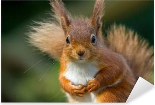 Pixerstick Dekor Red Squirrel ser så söt