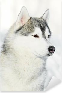 Pixerstick Dekor Siberian husky hund porträtt på vintern