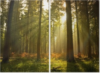 Beautiful forest Diptych