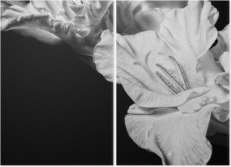 Black and white gladiolus Diptych