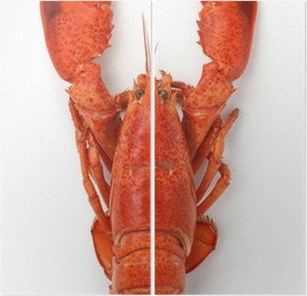 Boiled Lobster Isolated On White Background Diptych