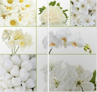 Collage Of Different White Flowers Wall Mural Pixers We Live To