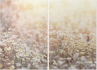 Daisy meadow Diptych