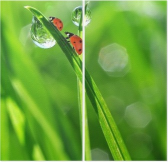 fresh morning dew and ladybirds Diptych