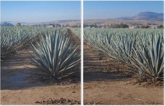 Lanscape tequila guadalajara Diptych