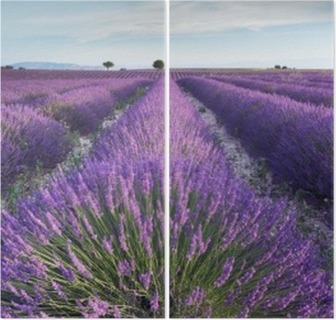 Lavender field in Provence during early hours of the morning Diptych
