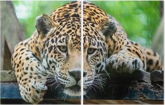 South American jaguar Diptych