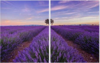 Tree in lavender field at sunrise in Provence, France Diptych
