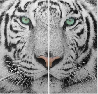 white tiger Diptych