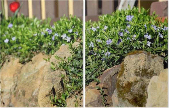 Diptychon Immergrün (Vinca) Auf Steingarten   Blumen