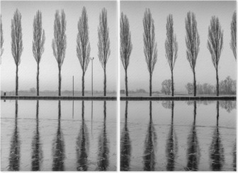 Diptych Alberi riflessi sul lago all'alba i bianco e nero
