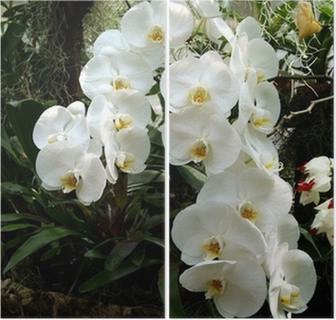 erotik helsingborg orkide thai