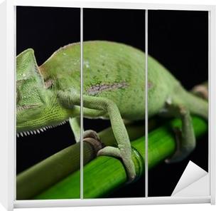 Dolap Çıkartması Ejderha, Yeşil bukalemun
