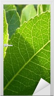 feuilles et ombres Door Sticker
