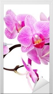 isolated orchid Door Sticker