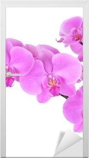 Phalaenopsis orchid Door Sticker