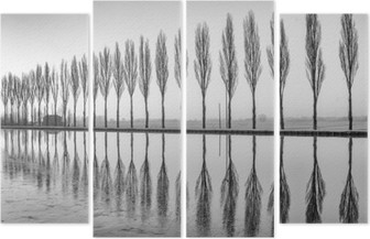 Dört Parçalı Alberi riflessi sul lago all'alba in bianco e nero