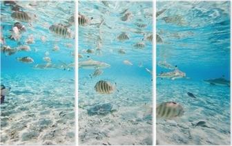 Drieluik Bora Bora onderwater
