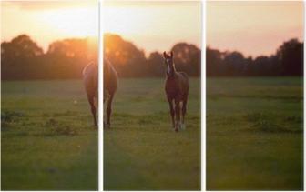 Drieluik Moeder paard met veulen op landbouwgrond bij zonsondergang. Geesteren. achter