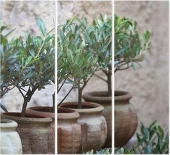 Boom In Pot Tuin.Olijfolie Plant Middellandse Zee Ten Zuiden Boom Tuin Pot