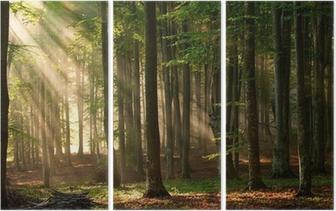 Drieluik Zonnestralen in een bos