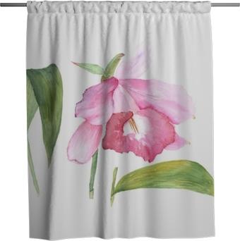 Duschgardin Botanisk akvarell illustration skiss av rosa cattleya blomma på vit bakgrund