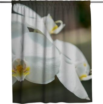 Duschvorhang Orchideen