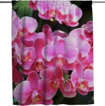 Duschvorhang Schöne rosa Farborchideen blühen und Grün lässt Hintergrund im Garten am Winter- oder Frühlingstag für Postkartenlandwirtschaftsidee, als Naturkonzept.